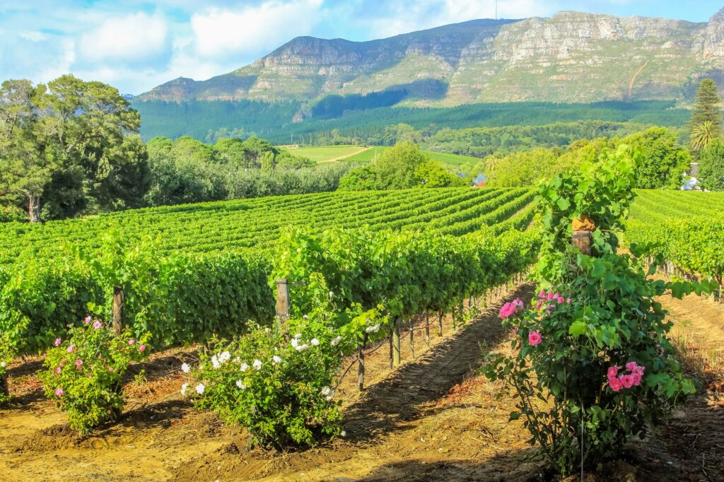 Virtual event to showcase Stellenbosch destination to tourism and travel partners 1